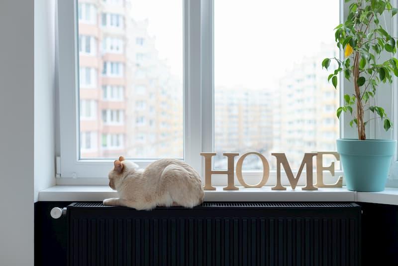 Eine Katze sitzt vor dem Fenster auf einer Ölheizung