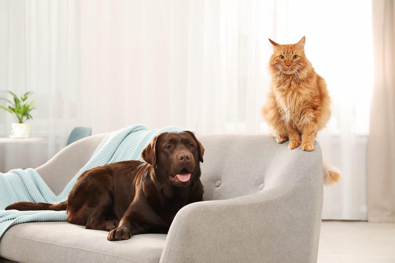 Ein Hund und eine Katze sitzen auf einer Couch in einer Mietwohnung
