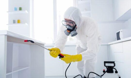 Wann muss ein Schädlingsbekämpfer gegen Ungeziefer in der Wohnung vorgehen?